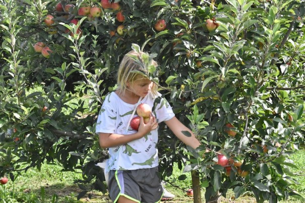 Apple growers hope to attract a lot of U-pick visitors this year.