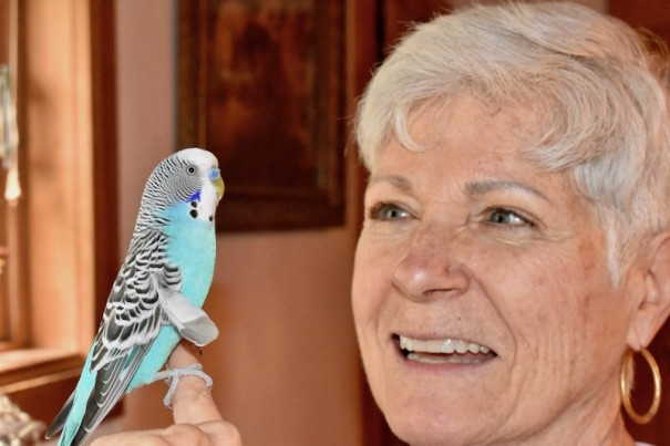 Budgie the parakeet survived in the wild for six weeks before he was reunited with Judy Durfee.
