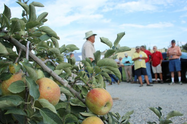 Apple farmers listen to extension agent Marvin Owings during a pre-harvest apple tour on Tuesday.