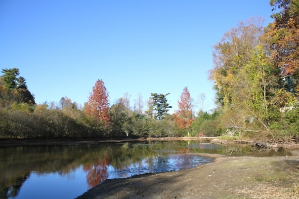 Rhododendron Lake Park would include walking trails along stream and pond.