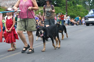 Saluda's Coon Dog Day Festival features a parade, street dance and coon dog contests.
