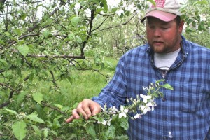 Jerred Nix examines apple blossoms in April.